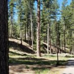 Pine Valley Mountains Utah Recreation Area