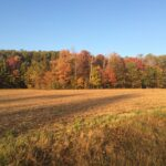 White Marsh Pine Valley