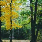 Cloquet Pine Valley
