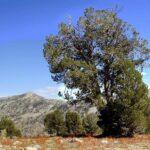 Pine Valley Nevada