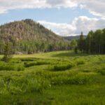 Pine Valley Plumbing Alpine