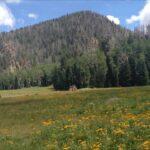Pine Valley Mountains Utah Trails