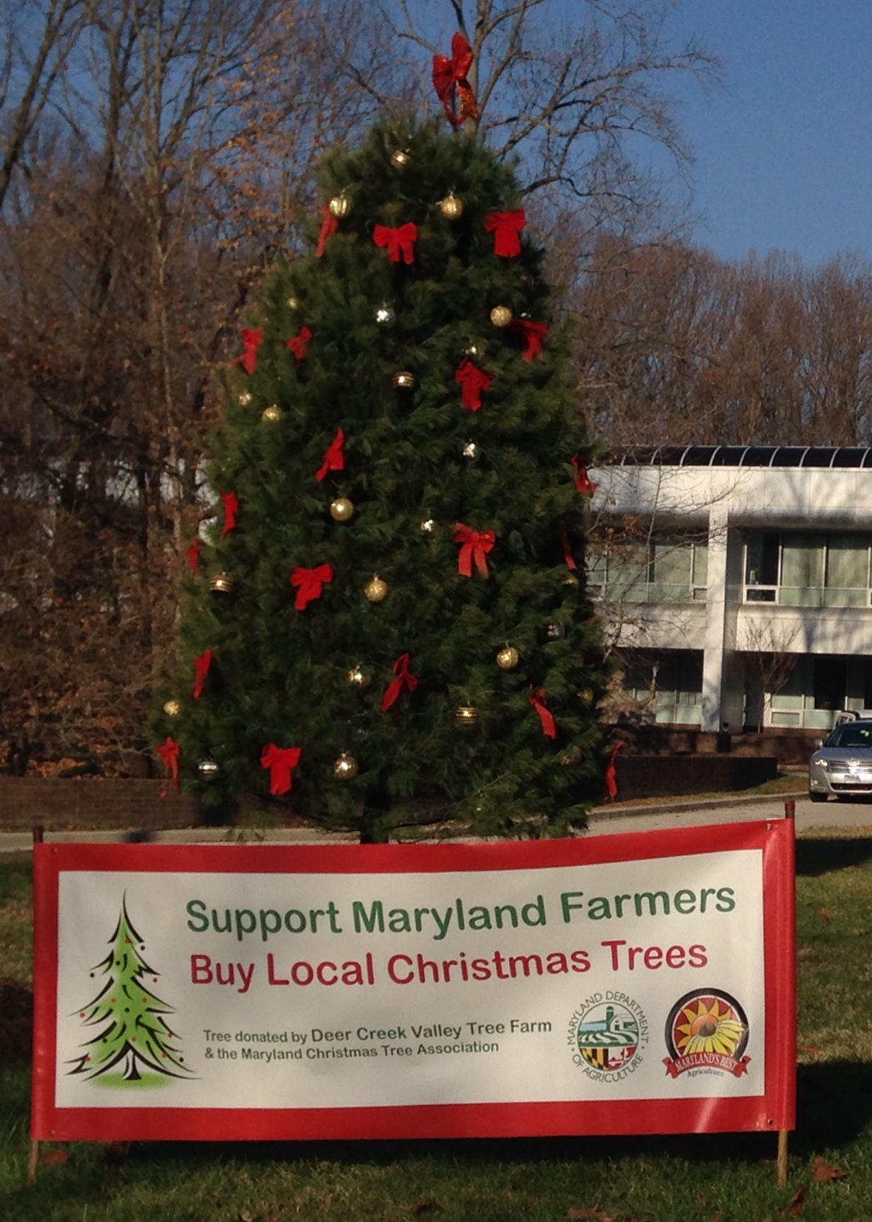 Md. Dept. of Agriculture Lights 19-foot Christmas tree ...