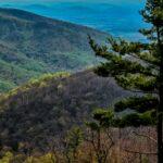 Pine Valley Tree Service Nj