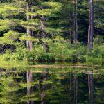 Pine Valley Tasmania Parks And Wildlife
