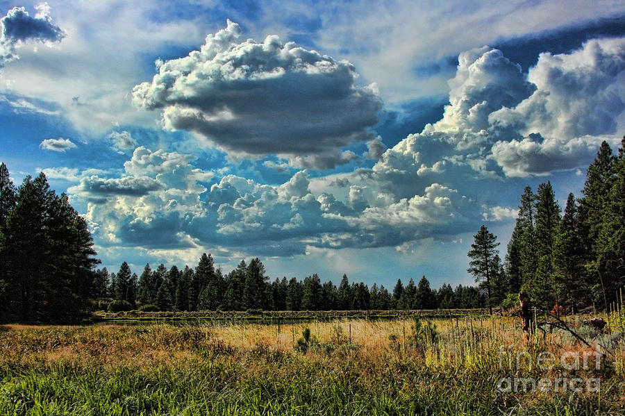 Pine Valley Utah Photograph by Mike Canter