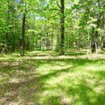 Pine Valley Lake Alabama