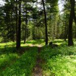 Pine Creek Paradise Valley Montana