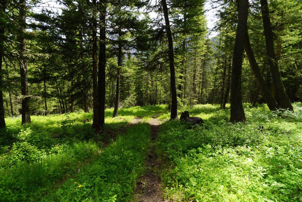 Wooded Acreage Near Pine Creek / Montana Land For Sale