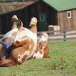 Pine Valley Farm Horses