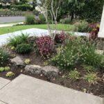 Mugo Pine Valley Cushion Low Or Medium Water Use Plants