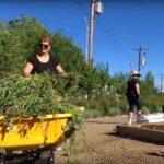 Pine Valley Gardens & Landscaping Ltd