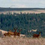 Pine Valley Golf Course Simcoe