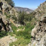 Valley Vet Pine Mountain