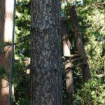 8955 Lone Pine Drive Valley Springs Ca 95252