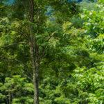 101 The Pines Canaan Valley West Virginia