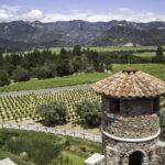 Pina Wine Napa Valley