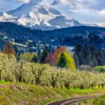 Allen Cannon Pine Valley Utah