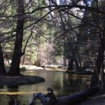 The North Pines Campground In Yosemite Valley