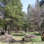 Pine Valley Recreation Area To Zion National Park
