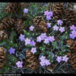 Pine Valley Flowers