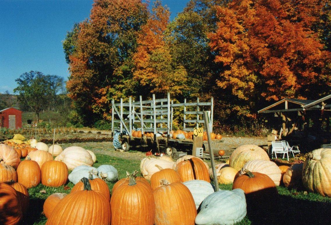 Pine valley farms NY (Watkins Glen) | Pine valley, Pumpkin ...