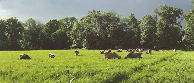 Pine Plains Farms | Chaseholm Farm | Dutchess County Farms ...